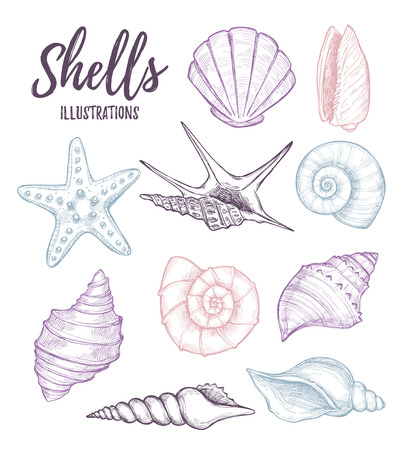 Hand drawn vector illustrations - collection of seashells.  Marine set. Perfect for invitations, greeting cards, posters, prints, banners, flyers etc