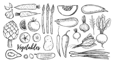 Hand drawn vector illustrations - collection of vegetables (carrots, potatoes, garlic, tomatoes, asparagus, artichoke, pumpkin, spinach). Design elements in sketch style. Perfect for posters, packing, restourant menu, brochures, flyers