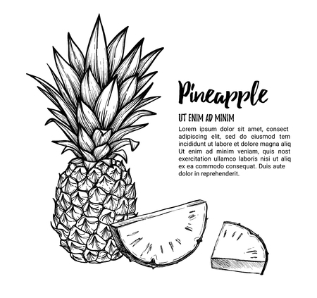 Hand drawn vector illustration - Pineapple. Exotic tropical fruit. Sketch. Outline. Perfect for packing, prints, invitations, greeting cards, posters, banners etc.