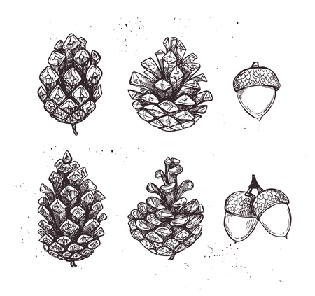 Hand drawn vector illustrations. Collection of pine cones and acorns. Forest vintage elements. Perfect for invitations, greeting cards, posters, prints Illustration
