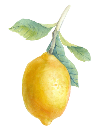 Hand drawn watercolor illustration - Lemon. Blossom plant with leaves. Perfect for invitations, greeting cards, blogs, posters and more