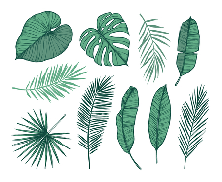 Illustration vectorielle dessinés à la main - feuilles de palmier (monstera, areca palm, fan palm, feuilles de bananier) Éléments de design tropical. Parfait pour les impressions, affiches, invitations, etc. Banque d'images - 82088892