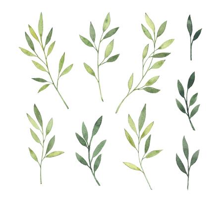손으로 그린 수채화 그림입니다. 식물 클립 아트. 녹색 잎, 나물 및 분기의 집합입니다. 플로랄 디자인 요소입니다. 청첩장, 인사 장, 블로그, 포스 스톡 콘텐츠
