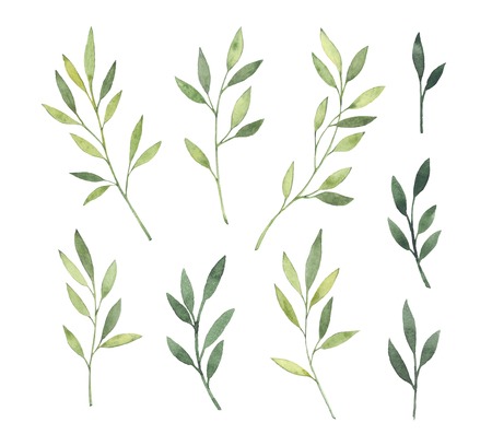 Hand drawn watercolor illustrations. Botanical clipart. Set of Green leaves, herbs and branches. Floral Design elements. Perfect for wedding invitations, greeting cards, blogs, posters and more Stock Photo