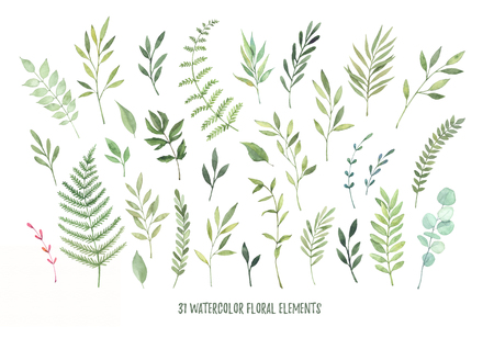 Hand drawn watercolor illustrations. Botanical clipart ( laurels, frames, leaves, flowers, swirls, herbs, branches). Floral Design elements. Perfect for wedding invitations, greeting cards, blogs, posters and more