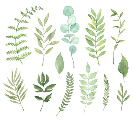 Hand drawn watercolor illustrations. Botanical clipart. Set of Green leaves, herbs and branches. Floral Design elements. Perfect for wedding invitations, greeting cards, blogs, posters and more 版權商用圖片