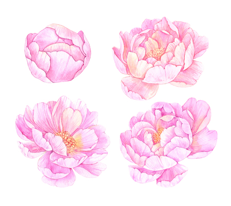 Hand drawn watercolor illustrations. Pink peonies flowers. Save the date. Perfect for wedding invitations, greeting cards, blogs, posters, prints and more