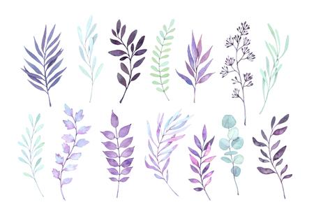 Illustrazioni ad acquerello disegnato a mano. Autunno clipart botanica. Set di foglie viola, erbe e rami. Elementi di design floreale. Perfetto per inviti di nozze, biglietti di auguri, poster, stampe Archivio Fotografico - 84799878