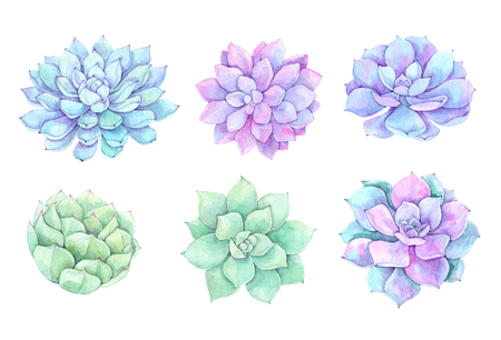 Watercolor illustrations - succulents clipart. Succulent and cactus collection. Perfect for Wedding invitation, greeting card, postcard, poster, textile, print etc.