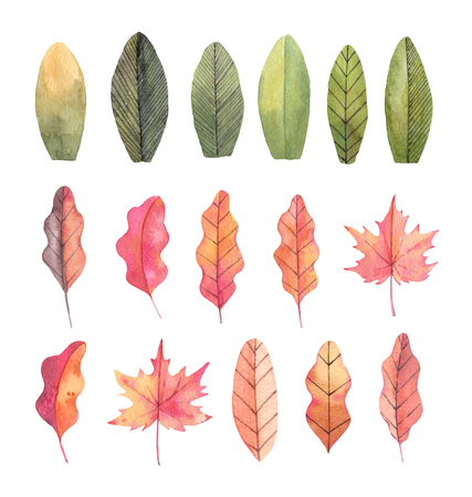 Hand drawn watercolor illustrations. Autumn Botanical clipart. Set of fall leaves. Floral Design elements. Perfect for invitations, greeting cards, blogs, posters, prints