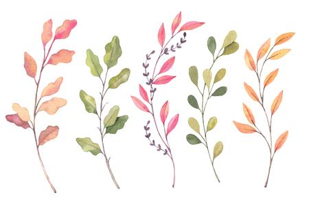 손으로 그린 수채화 그림입니다. 가 식물 클립 아트입니다. 가 단풍, 허브와 나뭇 가지의 집합입니다. 플로랄 디자인 요소입니다. 초대장, 인사 장,