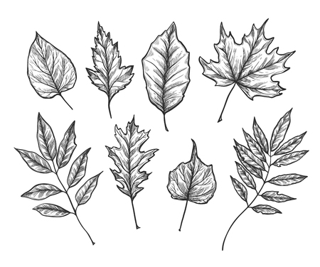 手には、ベクトルのイラストが描かれました。秋の葉をセットします。フォレストのデザイン要素です。秋