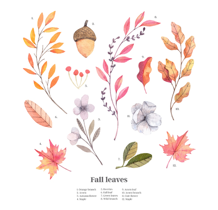 Hand drawn watercolor illustrations. Autumn Botanical clipart. Set of fall leaves, herbs, flowers and branches. Floral Design elements. Perfect for invitations, greeting cards, blogs, posters, prints Archivio Fotografico