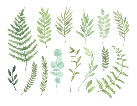 Vector watercolor illustrations. Botanical clipart. Set of Green leaves, herbs and branches. Floral Design elements. Perfect for wedding invitations, greeting cards, blogs, posters and more Vektorové ilustrace