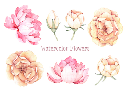 Hand drawn watercolor illustrations. Pink and yellow flowers. Peony and dog rose. Perfect for wedding invitations, greeting cards, blogs, posters, prints and more Stock Photo