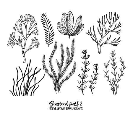 Ręcznie rysowane ilustracje wektorowe. Wodorost. Rośliny ziołowe w stylu szkicu. Idealne na etykiety, zaproszenia, karty, ulotki, druki itp Ilustracje wektorowe