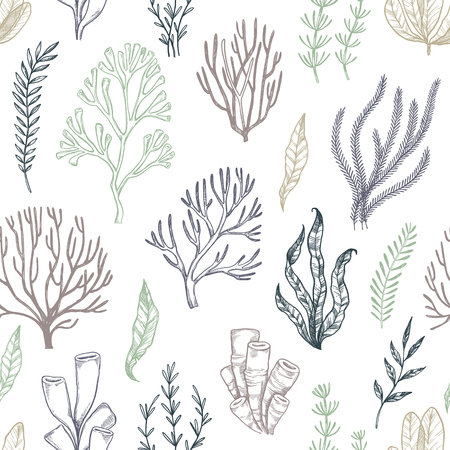 Hand drawn vector seamless patterns. Seaweed. Background with herbal plants in sketch style. Perfect for textile, fabric, invitations, cards, leaflets, prints etc Illustration