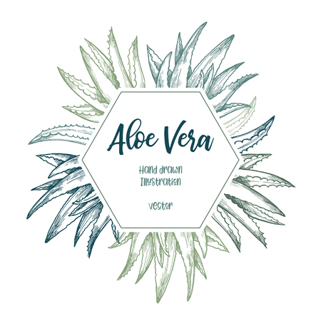 Hand drawn vector illustration. Label with aloe vera. Herbal plant. Clipart in sketch style. Perfect for cosmetics labels, invitations, cards, leaflets etc Ilustracja