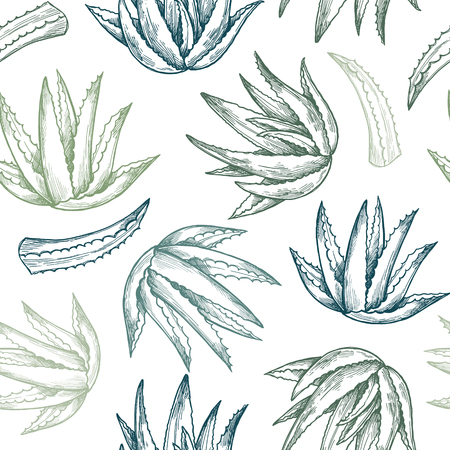 Hand drawn vector seamless pattern. Aloe vera. Herbal Background in sketch style. Perfect for cosmetics labels, invitations, cards, leaflets etc
