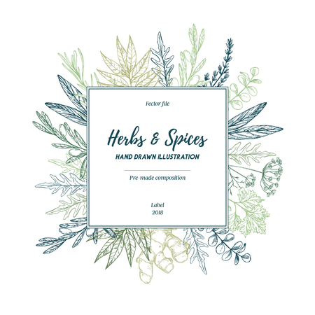 Hand drew vector illustration. Lable with herbs and spices (sage, tarragon, ginger). Herbal pre-made composition. Ilustracje wektorowe