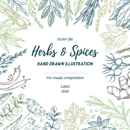 Hand drew vector illustration. Frame with herbs and spices (sage, tarragon, ginger). Herbal pre-made composition.