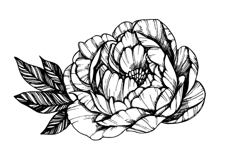 Hand drawn vector illustration - Peony flower. Floral Tattoo sketch. Perfect for tattooing, invitations, greeting cards, quotes, blogs, posters etc. Vetores