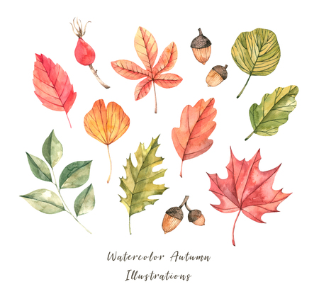 Hand drawn watercolor illustration. Set of fall leaves. Forest design elements. Hello Autumn! Perfect for seasonal advertisement, invitations, cards Stock Photo