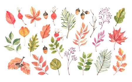 Hand drawn watercolor illustration. Set of fall leaves, acorns, berries, spruce branch. Forest design elements. Hello Autumn! Perfect for seasonal advertisement, invitations, cards Archivio Fotografico - 124958777