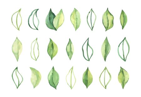 Hand drawn watercolor illustration. Botanical spring leaves. Greenery. Floral Design elements. Perfect for wedding invitations, cards, prints, posters Reklamní fotografie