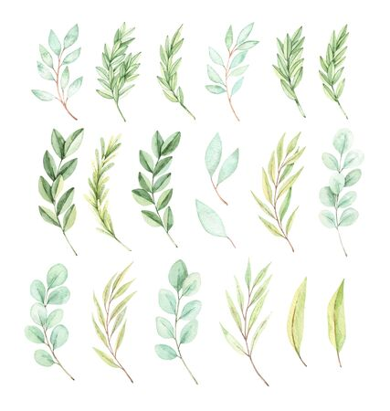 Hand drawn watercolor illustration. Botanical spring elements (eucalyptus, fir-tree branches, leaves). Greenery. Floral spring Design elements. Perfect for wedding invitations, cards, prints, posters Archivio Fotografico - 124958870