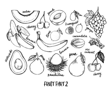 Hand drawn vector illustration - Collection of tropical and exotic Fruits. Healthy food elements. Melon, grape, banana, lime, cherry etc. Perfect for menu, packing, advertising, cooking book