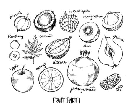 Hand drawn vector illustration - Collection of tropical and exotic Fruits. Healthy food elements. Physalis, kiwi, blueberry, orange, apple etc. Perfect for menu, packing, advertising, cooking book