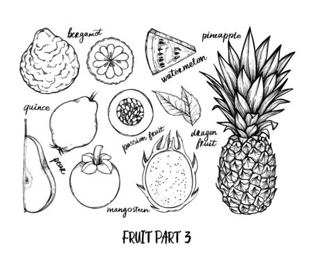Hand drawn vector illustration - Collection of tropical and exotic Fruits. Healthy food elements. Pineapple, watermelon, pear, mangosteen etc. Perfect for menu, packing, advertising, cooking book