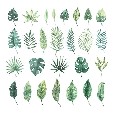 Watercolor illustration. Summer tropic design elements. Tropical palm leaves (monstera, areca, fan, banana). Perfect for invitations, prints, packing, fabric, textile, wrapping paper