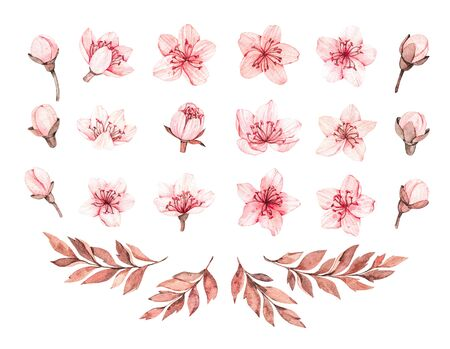 Spring watercolor illustration. Sakura bloom. Cherry. Botanical pink flowers and branches. Floral blossom elements. Perfect for wedding invitations, cards, prints, posters, packing Banco de Imagens