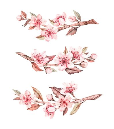 Spring watercolor illustration. Sakura bloom. Cherry. Botanical branches with pink flowers and leaves. Floral blossom elements. Perfect for wedding invitations, cards, prints, posters, packing