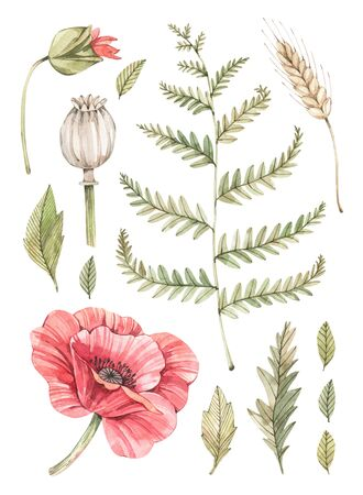 Watercolor illustration. Botanical composition with a red poppy, a fern, a rye and some leaves. Succulent in pot. Greenery. Floral Design element. Perfect for wedding invitations, cards, prints, posters