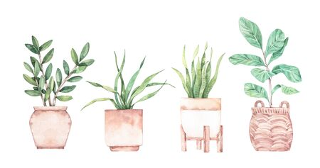 Watercolor illustration. Botanical houseplants collection. Plants with big leaves in pots. Greenery. Succulent. Floral Design element. Perfect for invitations, cards, prints, posters Stock Photo