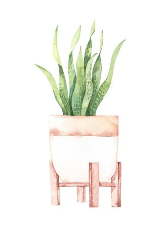 Watercolor illustration. Botanical houseplant. Plant with big leaves in pot. Greenery. Floral Design element. Perfect for invitations, cards, prints, posters