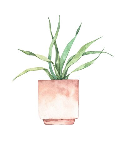 Watercolor illustration. Botanical houseplant. Succulent in pot. Greenery. Floral Design element. Perfect for invitations, cards, prints, posters Banco de Imagens