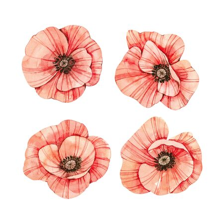 Watercolor botanical illustrations. Fresh red poppy blossom. Wild flowers collection. Perfect for wedding invitations, cards, prints, posters, packing.  Banco de Imagens