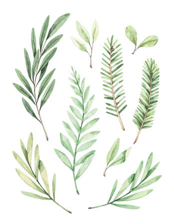 Christmas illustrations with eucalyptus, fir branch and mistletoe - Watercolor illustration. Happy new year. Winter greenery design elements. Perfect for cards, invitations, banners, posters etc