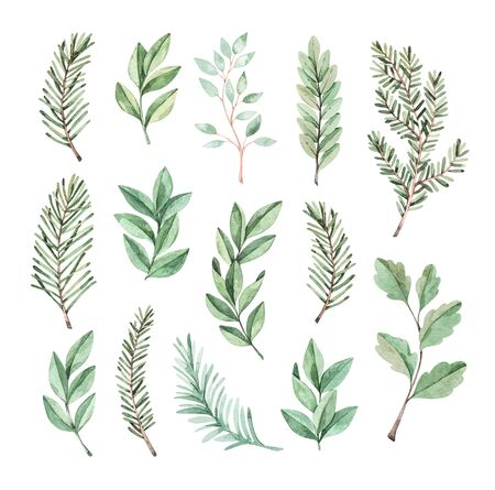Hand drawn watercolor illustration. Botanical clipart with eucalyptus and fir-tree branches. Greenery. Floral Design elements. Perfect for wedding invitations, cards, prints, posters, packing