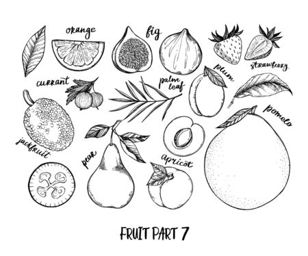 Hand drawn vector illustration - Collection of tropical and exotic Fruits. Healthy food elements. Fig, pomelo, orange, jackfruit, pear etc. Perfect for menu, packing, advertising, cooking book Illustration