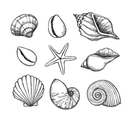 Hand drawn vector illustrations. Marine background with seashells. Collection of shell, sink and starfish. Perfect for invitations, fabric, textile, linens, posters, prints, banners
