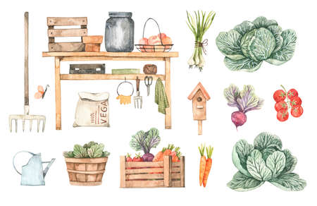 Watercolor Garden harvest illustrations with garden tools, vegetables, plants and farm objects. Spring summer seasons.Cartoon style. Perfect for cards, posters, prints, social media, advertise