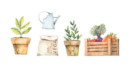 Watercolor Spring harvest illustrations with vegetables, watering can, grain bag, cabbage, plants. Spring summer elements. Perfect for invitations, greeting posters, prints, social media, cards