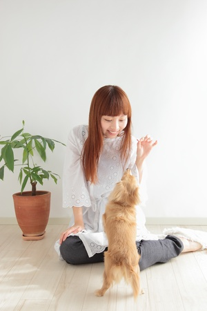 Young Asian woman playing with dachshund photo