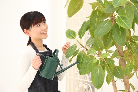 Potted plants: Young Asian woman watering plants indoors Stock Photo