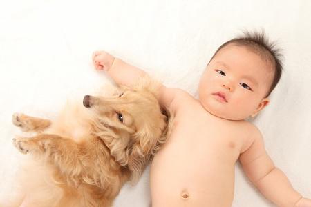 one dog: Asian boys and dachshund lying